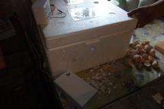 egg_incubator_broody_br-box_04