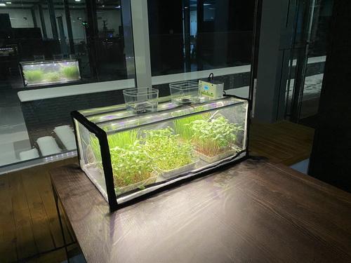 indoor_grow_plants_002