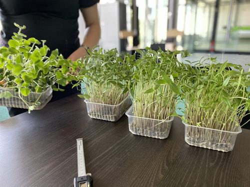 indoor_grow_plants_013