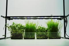 plant grow lights