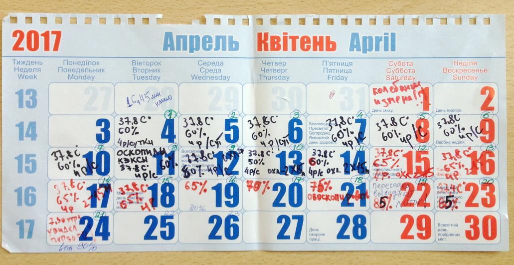 Το ημερολόγιο της επώασης κοτόπουλων στο γραφείο. Θερμοκοιτίδα μελαγχολικός