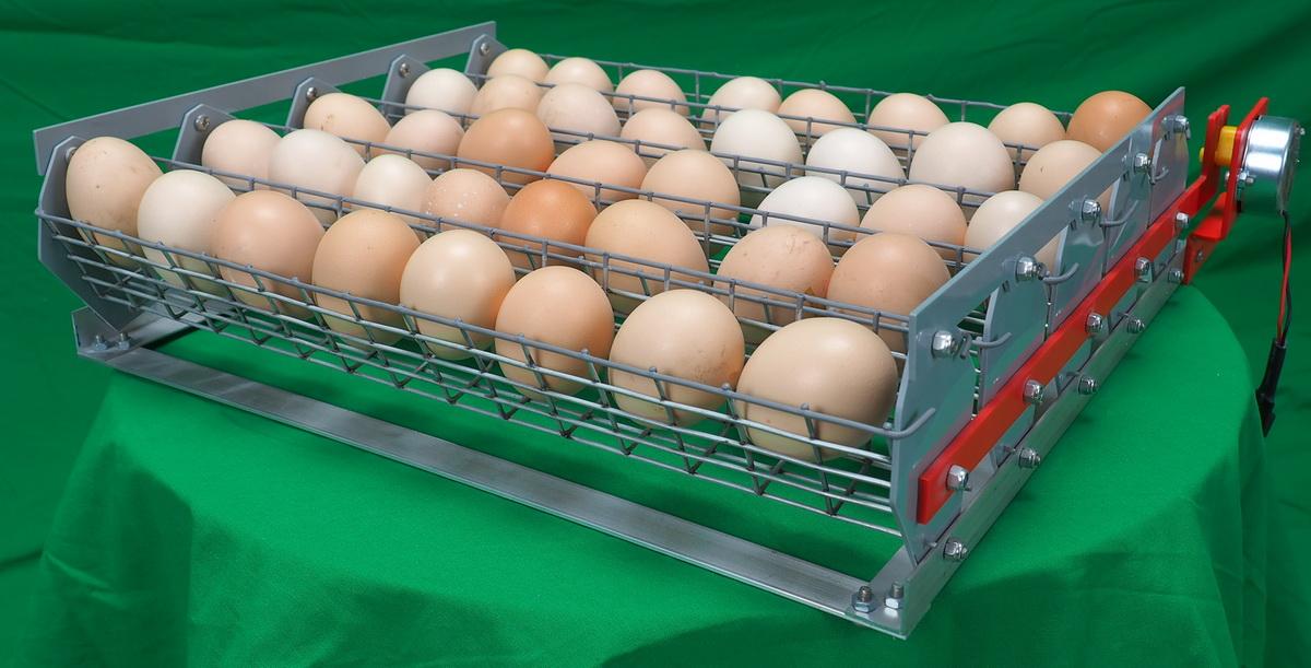 1 день инкубации. Отбор и закладка яиц.