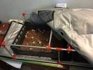 egg_incubation_quails_0040_broody_net