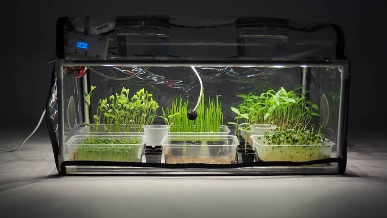 Germinator of microgreens GreenCap L - The best indoor greenhouses