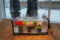 best light for growing plants indoors