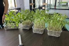 greencap_plant_grow_lights_017_indoor