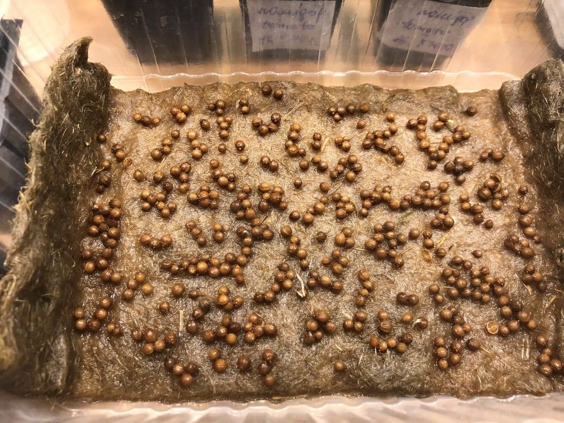 25_resize_grow_microgreen_germinator