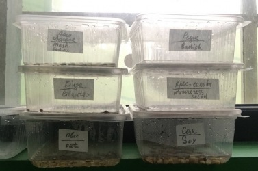 4_resize_grow_microgreen_germinator