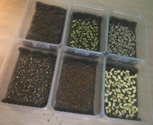 6_resize_grow_microgreen_germinator