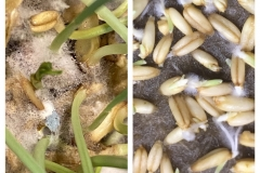 14_resize_grow_microgreen_germinator