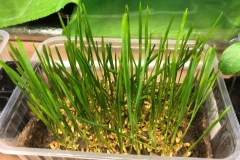 33_resize_grow_microgreen_germinator