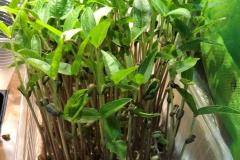 38_resize_grow_microgreen_germinator