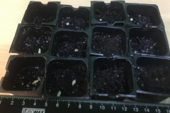 9_resize_grow_microgreen_germinator