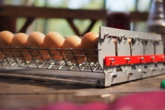 hens hatchability 93% Broody Zoom incubator