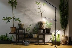 2-Indoor_grow_light_resize