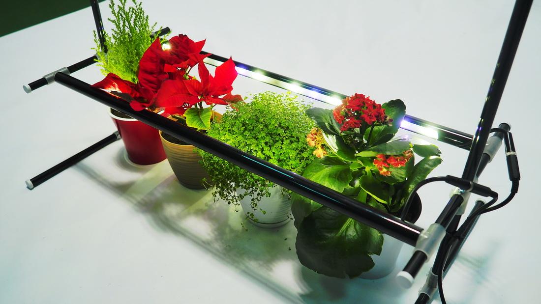 System oświetlenia roślin