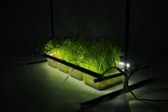 plant grow lights