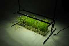 home-Plant-lighting-Metaflex_twilight