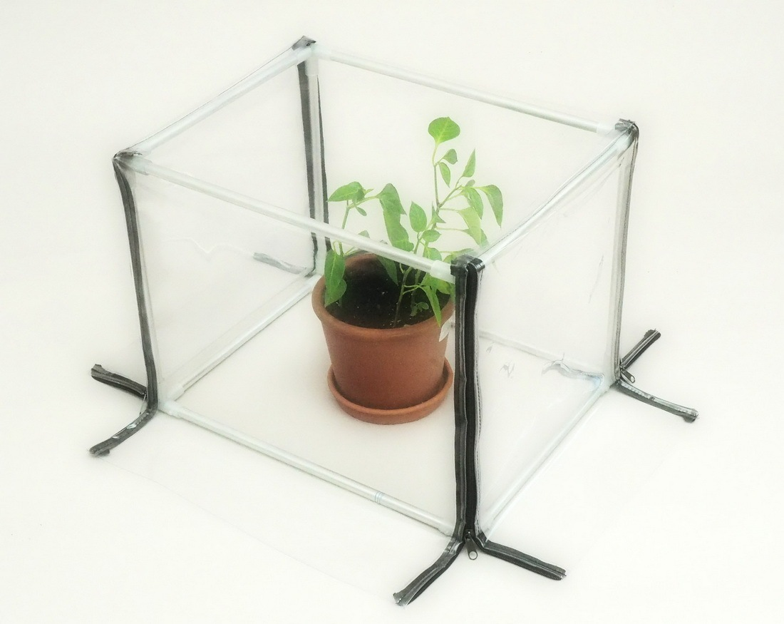Mini greenhouse for the apartment