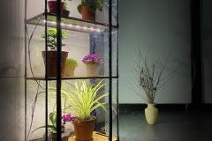 Mini_greenhouse decorate your home interior_