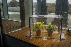 Sezam_L_greenhouse