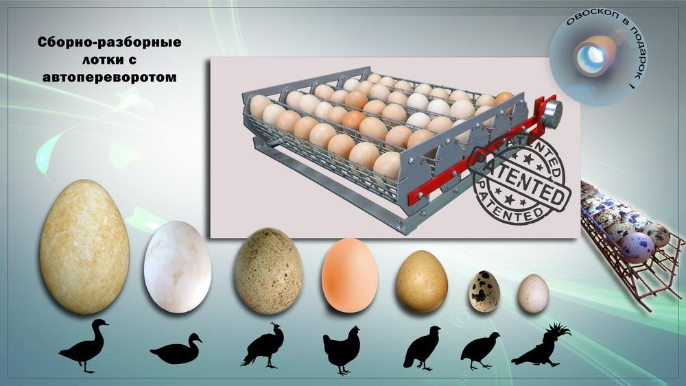 Съемные сборные лотки с автоматическим переворотом яиц