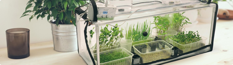Klimat dla roślin