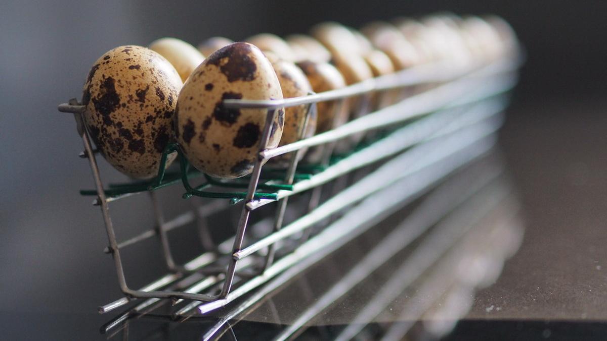 Εκκολαπτήριο για αυγά ορτυκιών