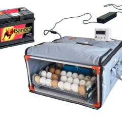 Incubadora de bajo costo con batería: ya es posible comprar en Ucrania desde el 1 de abril