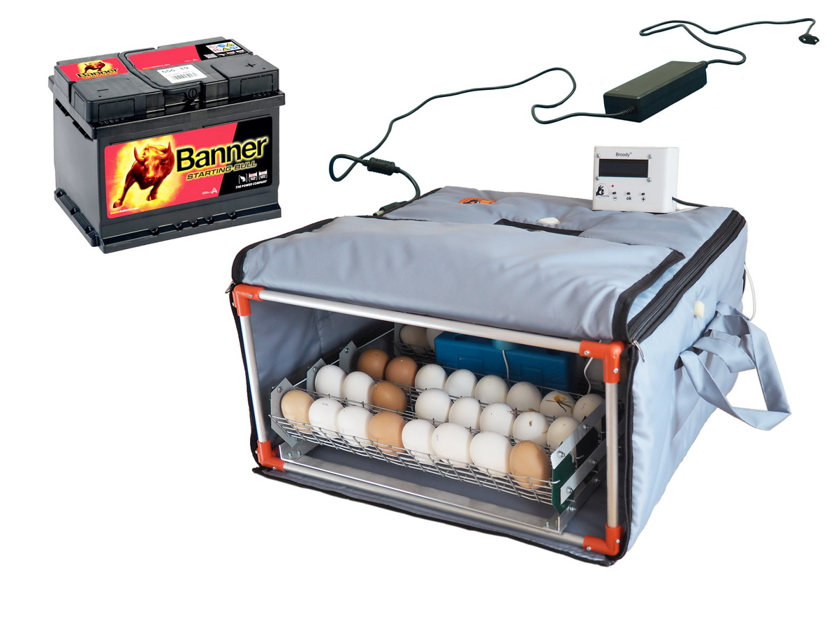 Inexpensive incubator with battery: it is already possible to buy in Ukraine from April 1